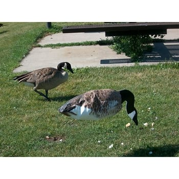 X Flapper Goose Decoy SILLOSOCK - FLAPPING C...